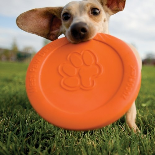 Frisbee pour chien - Frisbee Zisc Zogoflex