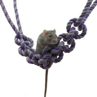 Jouet pour rat - Corde Rope Bridge Rosewood