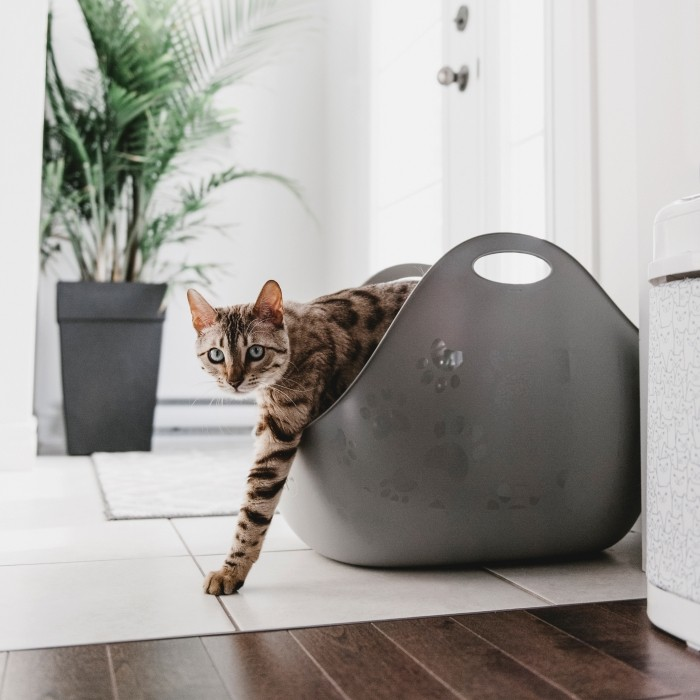 Litière chat, maison de toilette - Bac à litière LitterBox avec pelle pour chats