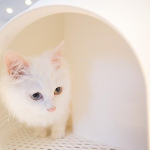 Litière chat, maison de toilette - L'Igloo pour chats