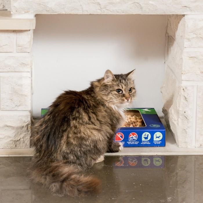 Litière & compagnie - Litière de voyage pour chats