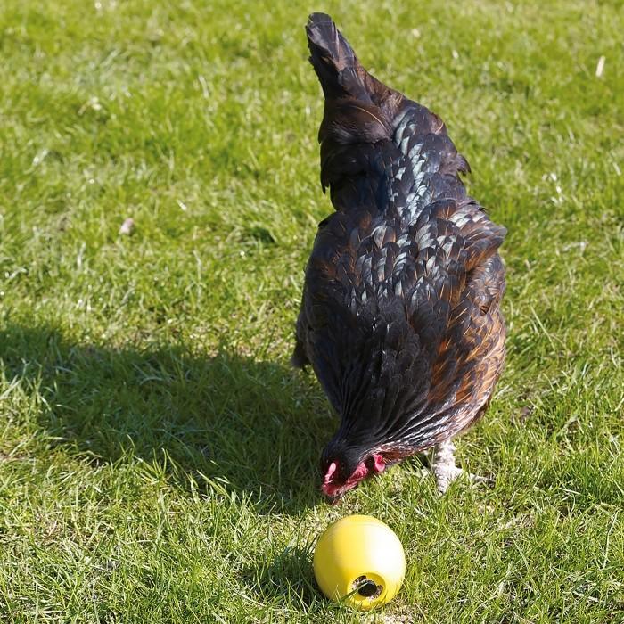 Mangeoire et abreuvoir poule - Balle Chicken Fun pour poules