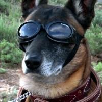 Accessoire pour chien - Lunettes de protection Originals Doogles