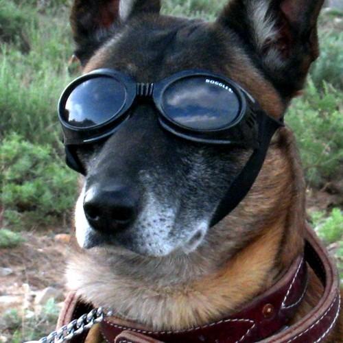 Manteau & compagnie - Lunettes de protection Originals pour chiens