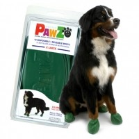 Convalescence du chien - Bottillons de protection PawZ