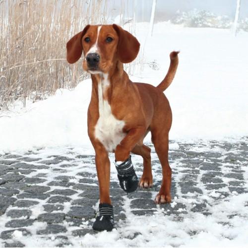 Sécurité et protection - Bottes de protection Walker Active pour chiens