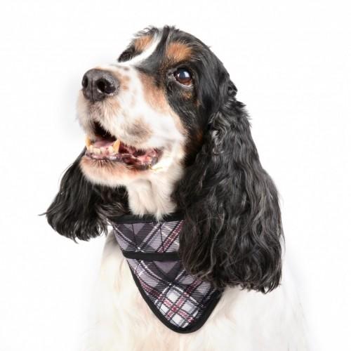 Manteau & compagnie - Bandana rafraîchissant gris pour chiens