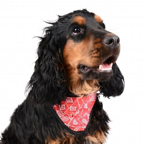 Sélection Eté - Bandana rafraîchissant rouge pour chiens