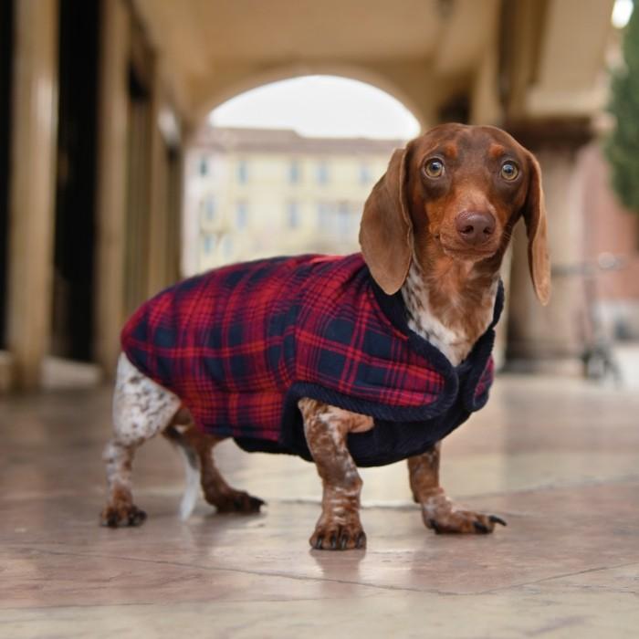 Manteau & compagnie - Manteau Cambridge pour chiens
