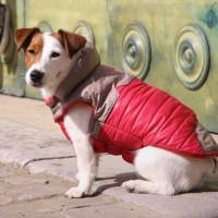 Manteau & compagnie - Manteau pour chien Life Rose