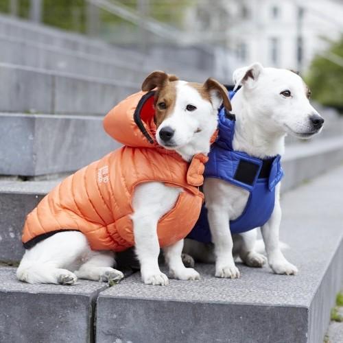 Manteau & compagnie - Manteau Studio - Orange pour chiens