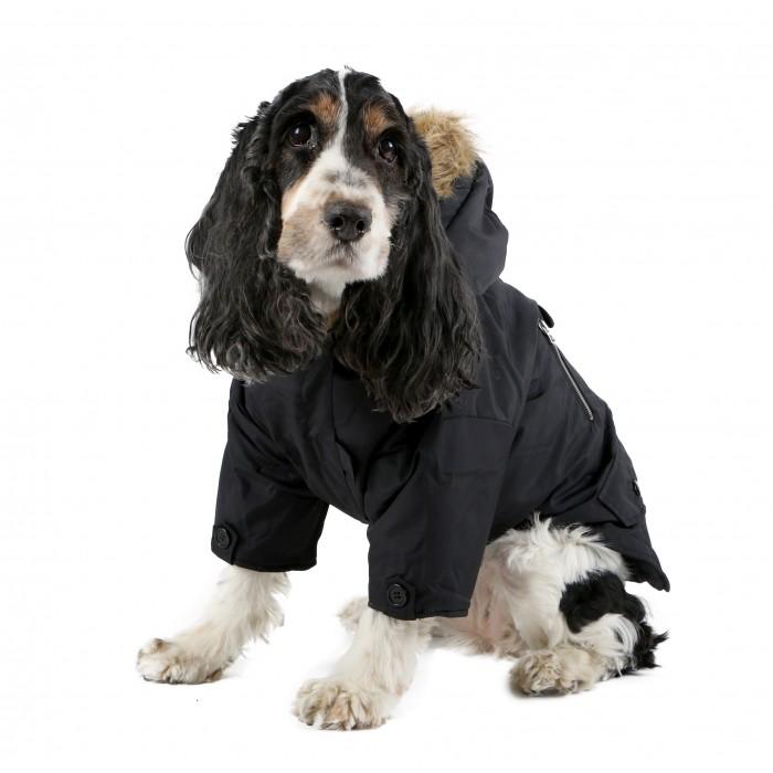 manteau pour petit chien sur manteaux. Black Bedroom Furniture Sets. Home Design Ideas