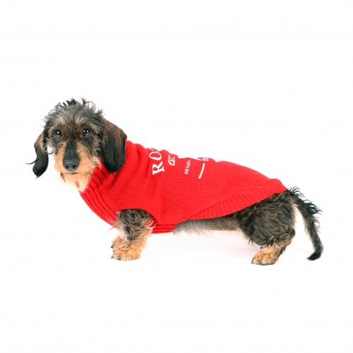 Manteau & compagnie - Pull Star rouge pour chiens