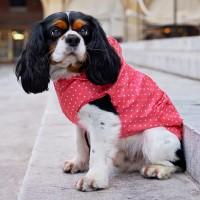 Manteau & compagnie - Imperméable pour chien Mulan