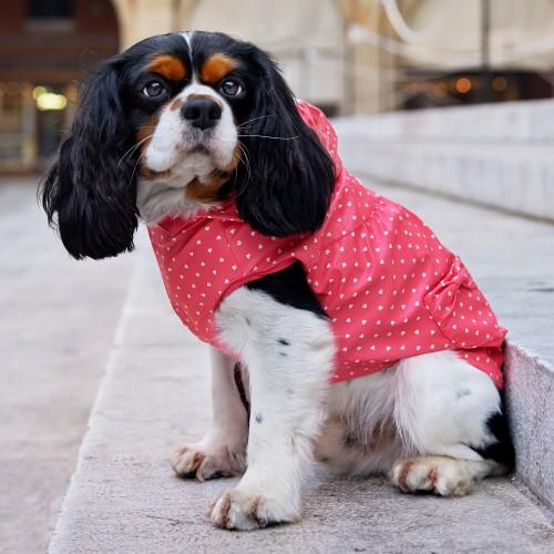 Manteau & compagnie - Imperméable pour chien Mulan pour chiens