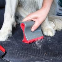 Entretien de l'habitat - Brosse anti-poils Shed Sweeper Kurgo