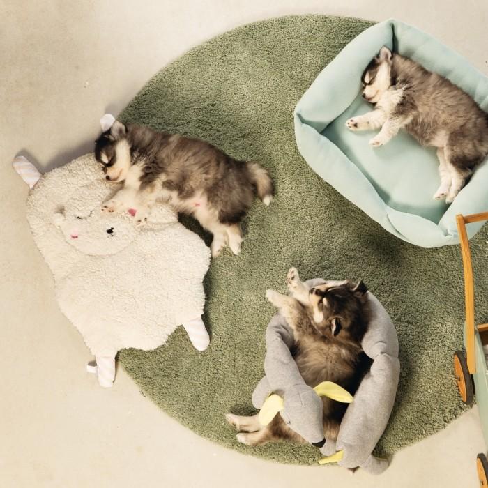 Panier et coussin pour chien - Coussin Welcome pour chiens
