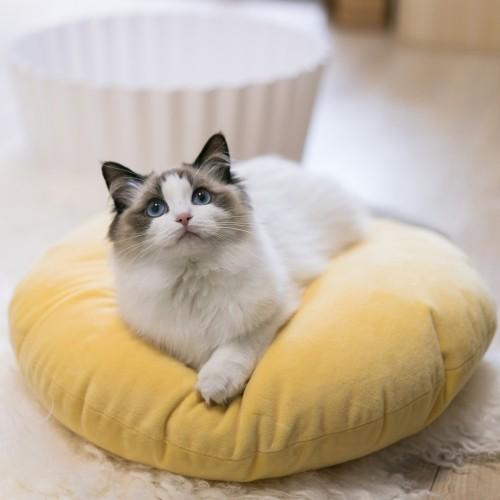 Panier et coussin pour chien - Panier Cupcake pour chiens