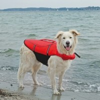 Gilet de sauvetage pour chien - Gilet de sauvetage Trixie
