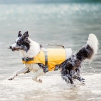 Gilet flottant pour chien - Gilet flottant Life Savior Hurtta