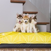 Coussin pour chien - Coussin Cloud Yellow Be One Breed
