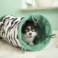 Tunnel de jeu pour chat - Tunnel Bengy Beeztees