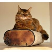 Griffoir pour chat - Griffoir La Banquette Cat-on®