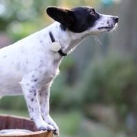 Suivi d'activité et nutritionniste pour chien et chat - Tracker d'activité Canhe-Fit Light Canhegat