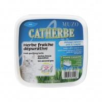 Herbe à chat dépurative à faire pousser - Herbe à chat dépurative Catherbe Muzo