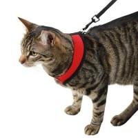 Harnais et laisse pour chat - Harnais et laisse Active Kerbl