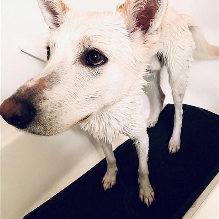 Shampooing et toilettage - Tapis de bain pour chiens