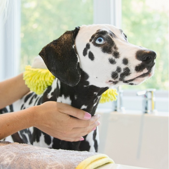 Shampooing et toilettage - Gant de toilette pour chiens