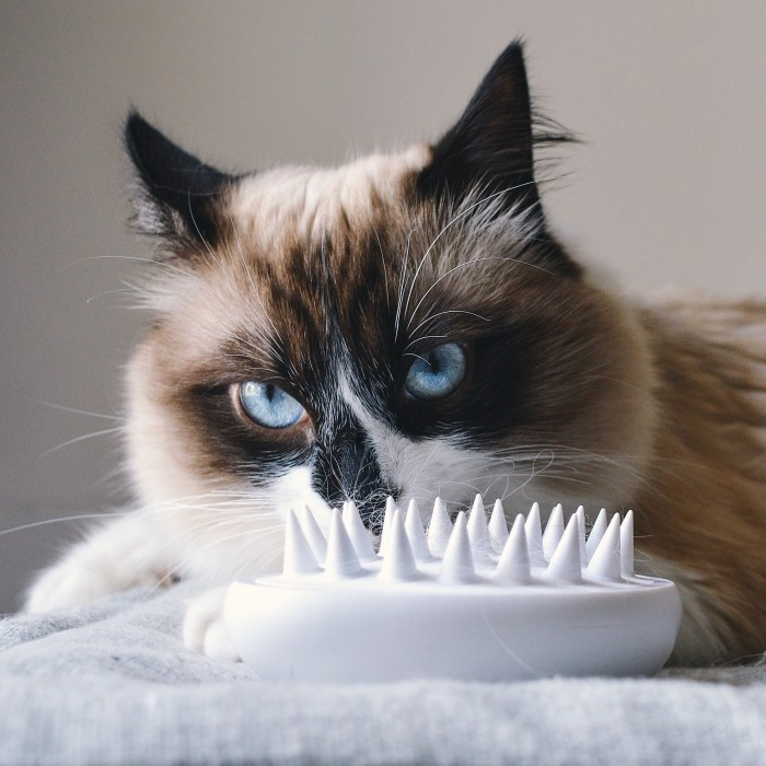 Shampooing et toilettage - Brosse Soft pour chats