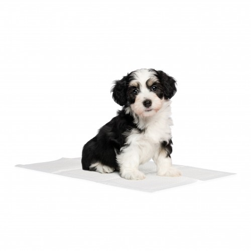 Boutique chiot - Tapis éducateur Basic pour chiens