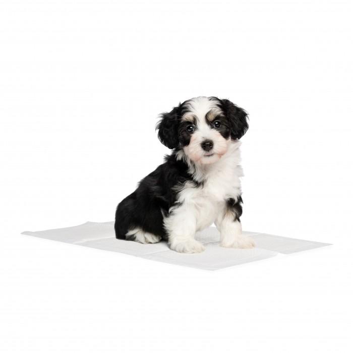 Comportement éducation - Tapis éducateur Basic pour chiens