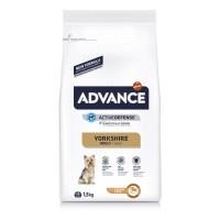 Croquettes pour chien - ADVANCE Yorkshire Terrier Yorkshire Terrier