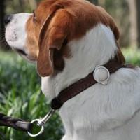 Capteur d'activité pour chien et chat - Capteur d'activité FIT Petkit