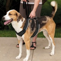 Sports Canins - Harnais EasySport