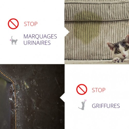 Stress, comportement chat - Feliway® Classic recharge pour chats