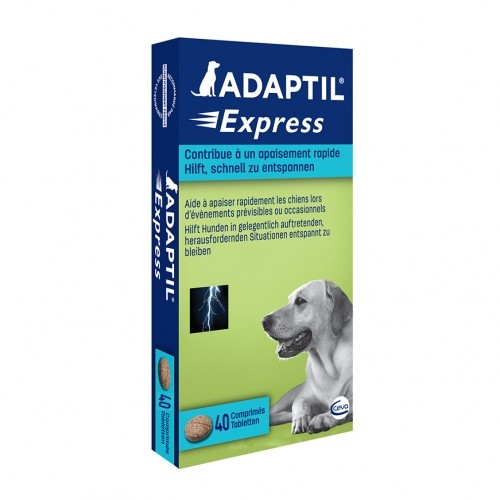 Stress, comportement chien - ADAPTIL® Express pour chiens