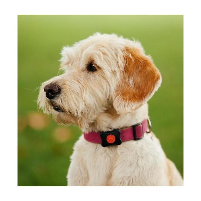 Stress, comportement chien - Boîtier connecté capteur d'activité pour chiens