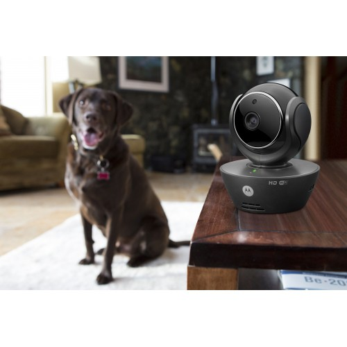 Stress, comportement chien - Caméra de surveillance Wifi Scout 85 pour chiens