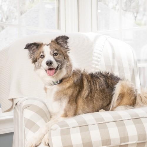Stress, comportement chien - Collier anti-aboiement à spray rechargeable pour chiens