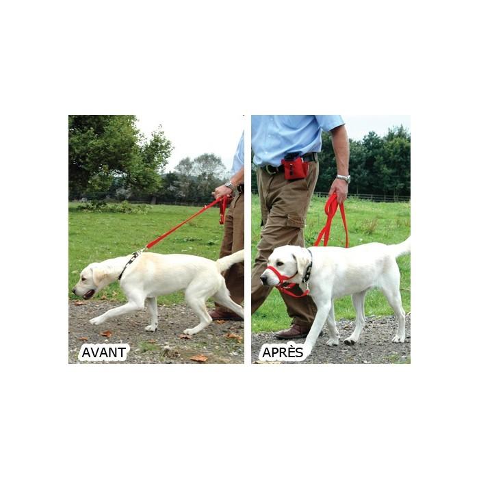 Stress, comportement chien - Licol Halti pour chiens