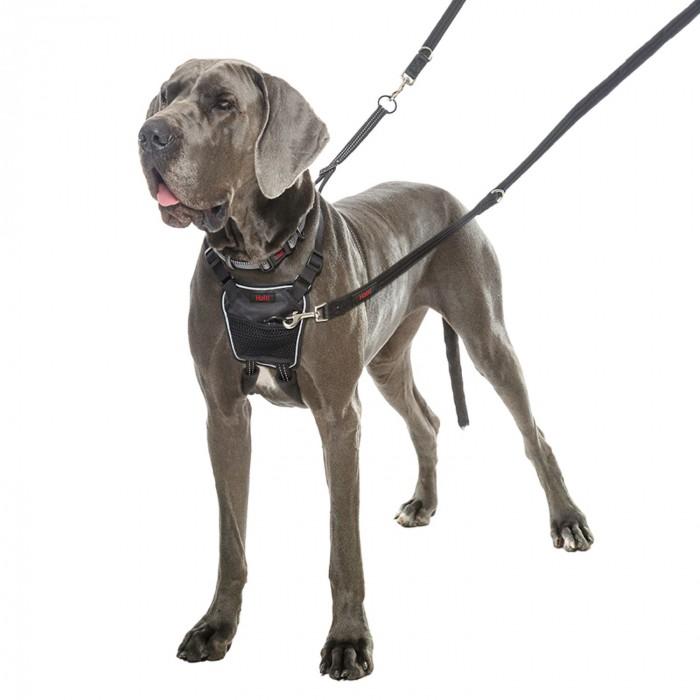 Stress, comportement chien - Harnais Non-Pull pour chiens