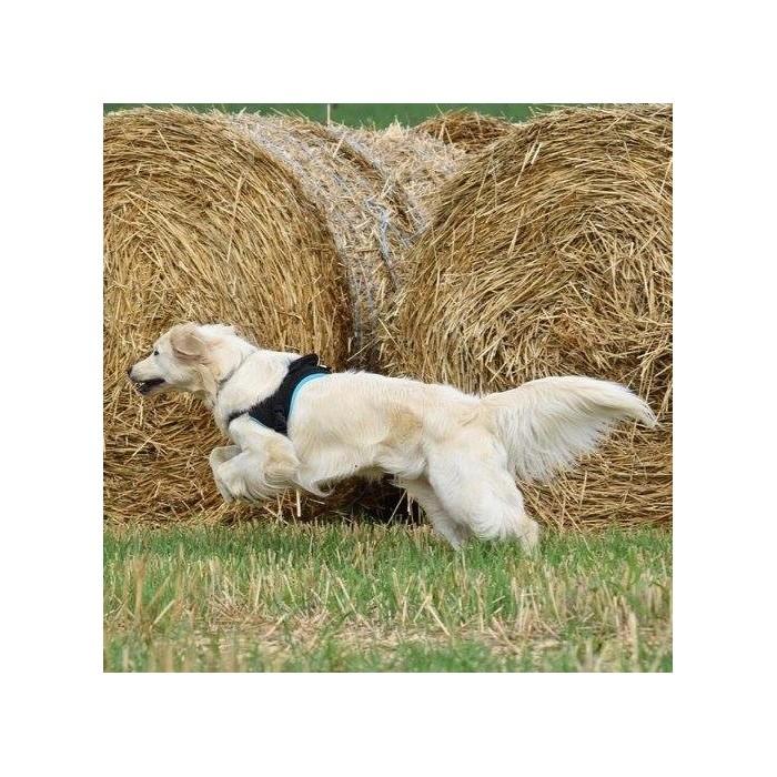 Stress, comportement chien - Multi Harnais Classic pour chiens