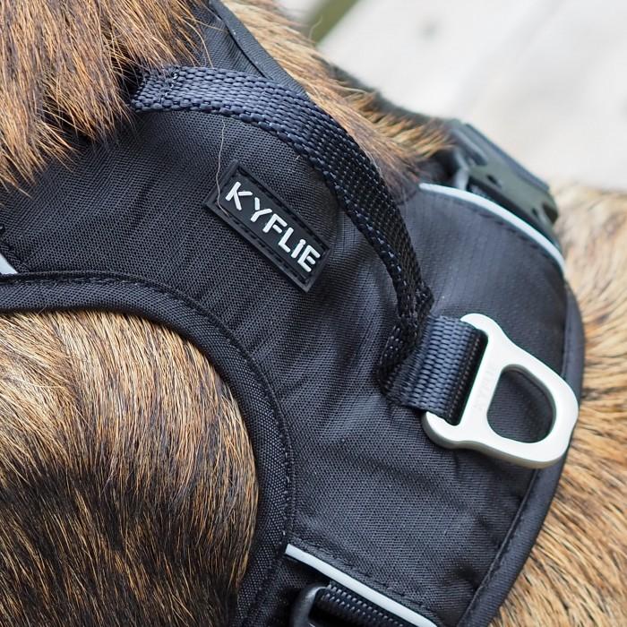Collier, laisse et harnais - Harnais Momentum Noir pour chiens