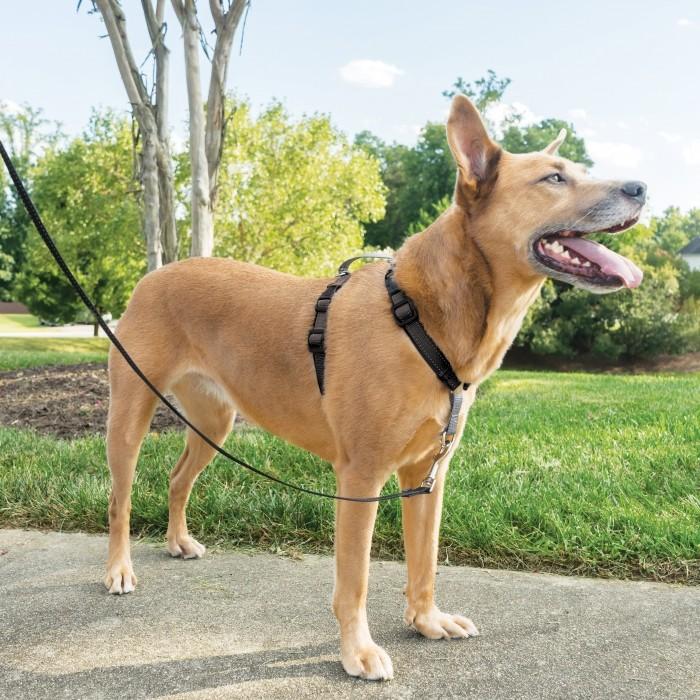 Stress, comportement chien - Harnais EasyWalk 3 en 1 pour chiens
