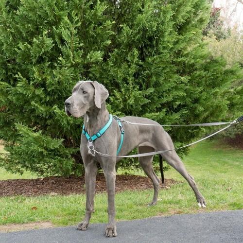 Stress, comportement chien - Laisse anti-traction Easywalk pour chiens