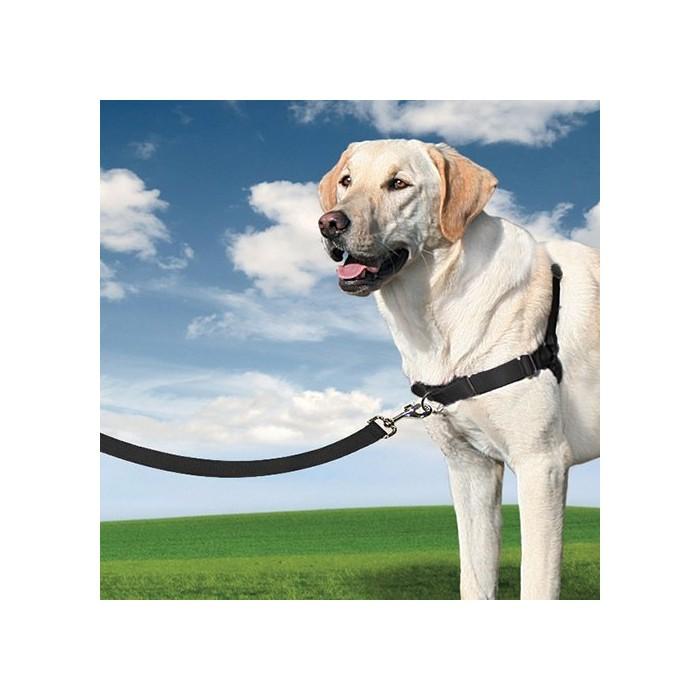Stress, comportement chien - Harnais Easy Walk™  pour chiens